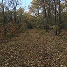 40 acres; Cordell Rd; Miller County, Missouri