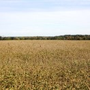 160 acres Pike County