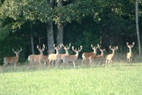 Scout Now for Early Deer Season!!