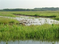 MDC offers free Wetland Management Field Day June 9 in Carrollton