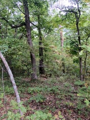 15.24 acres; Lake Rd 135-12/Ivy Bend; Morgan County