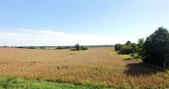 74.5 acres; County Rd 529; Lewis County