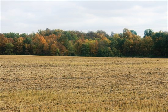 160 acre tillable farm with hunting in Montgomery County, Missouri