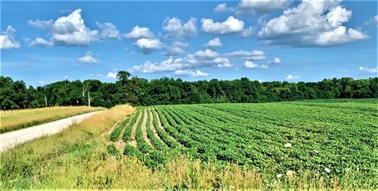 63 acres; County Rd 355; Audrain County