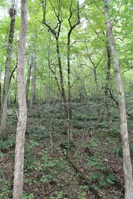 80 acres Reynolds County, Missouri