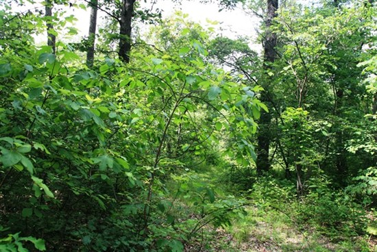 46 acres Pike County, Missouri