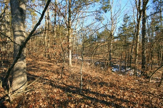 55.6 Acre Hunting Farm For Sale in Callaway County, Missouri