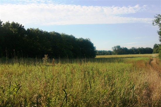 250 acre Combination Tract in Knox County
