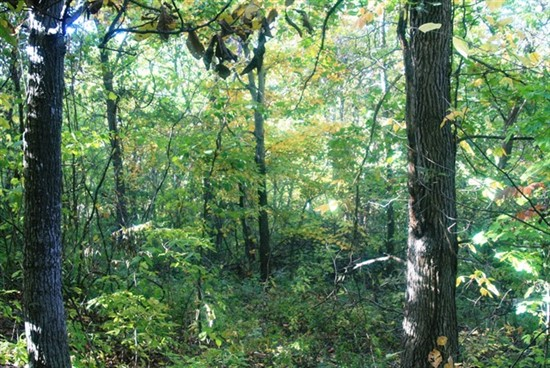 55 acre Recreational Tract in Pike County, Missouri