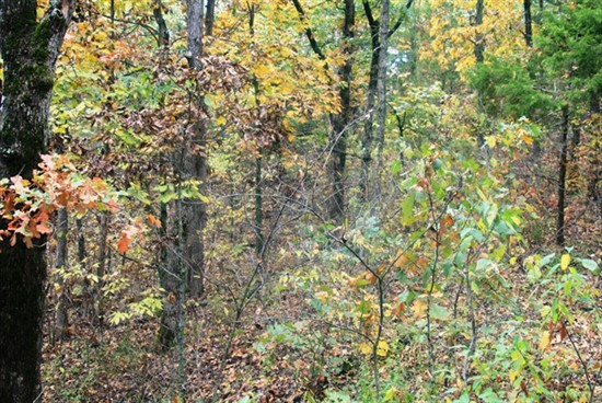 42.44 acre Recreation Tract in Montgomery County