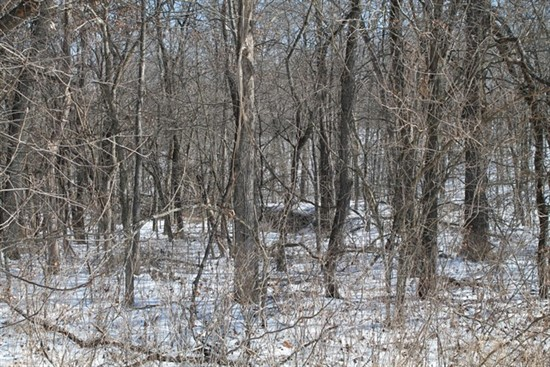 80 acre hunter's paradise in Knox County, Missouri