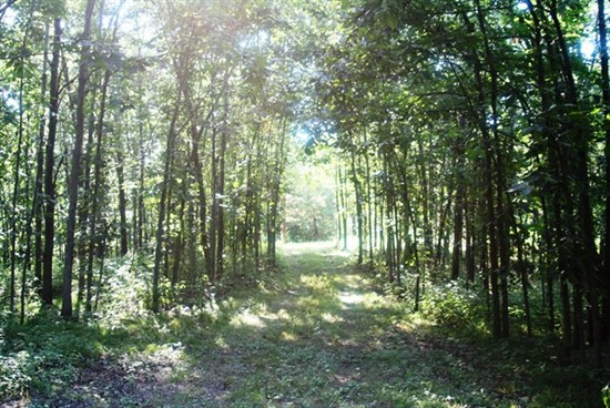 215 acres Managed for Whitetail in Putnam County, Missouri