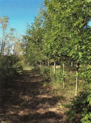 24.69 acres Lincoln County, Missouri