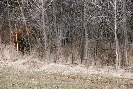 48+/- acres in Ralls County is a deer hunter's dream!